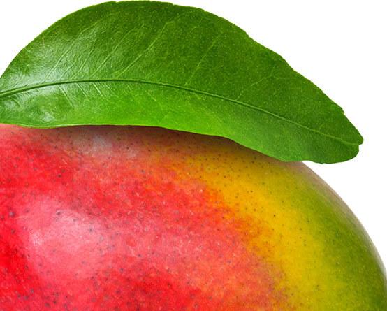 Über 150 Sorten von exotischen Früchten